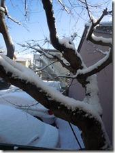 わが家からの雪