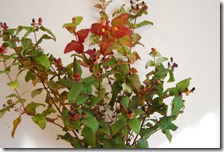 11月の花使用