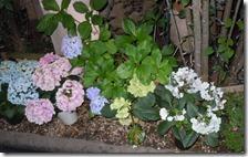 鉄平さんの紫陽花