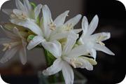 10月の白い花