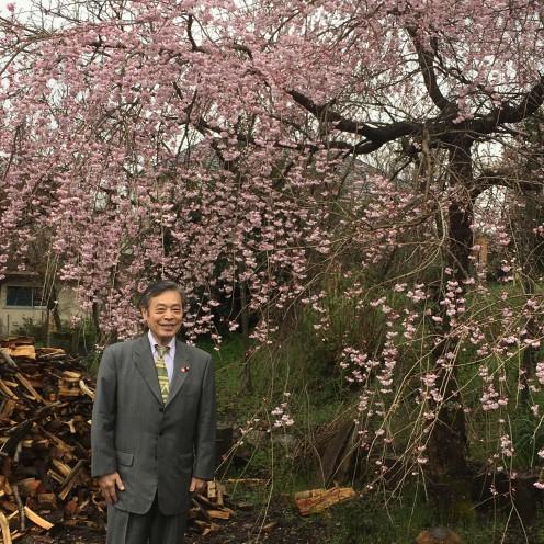 佐野邸 桜