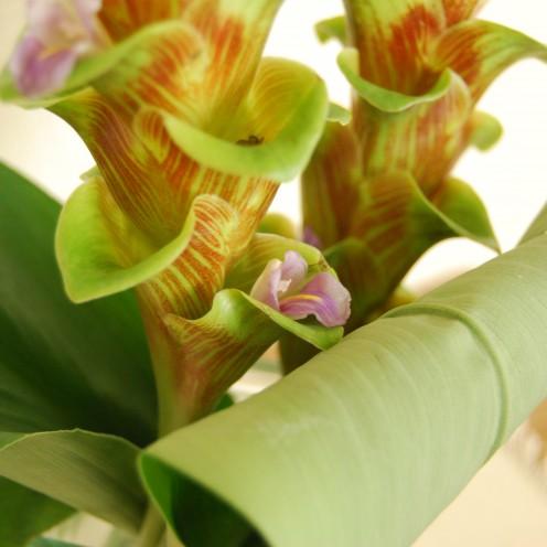 クルクマ花